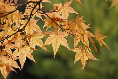 Blätter_0001