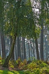 Wald_0016