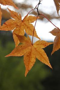 Blätter_0002