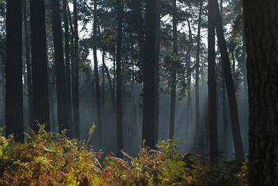 Wald, Waldbilder, Landschaft,
