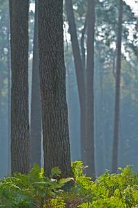 Wald_0030