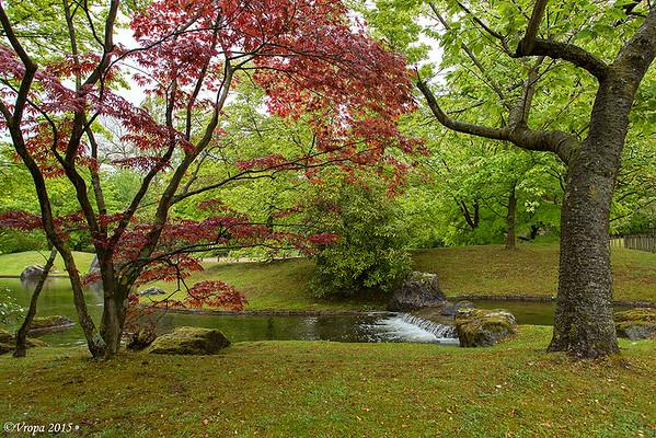 Japanse tuin Hasselt.