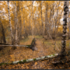 Midwolderbos/Midwolderforest