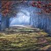 Bospad/Forest path