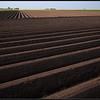Aardappelruggen/ridges