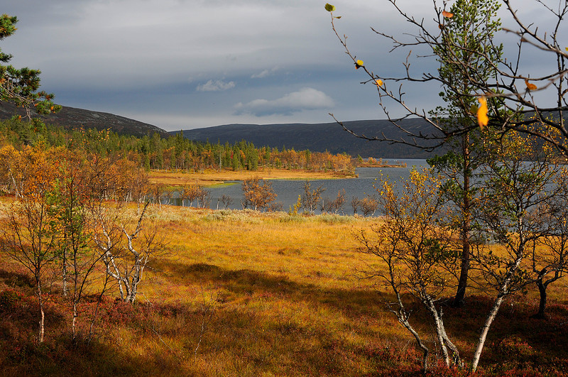 Autumn by Grovelsjoen, Sweden