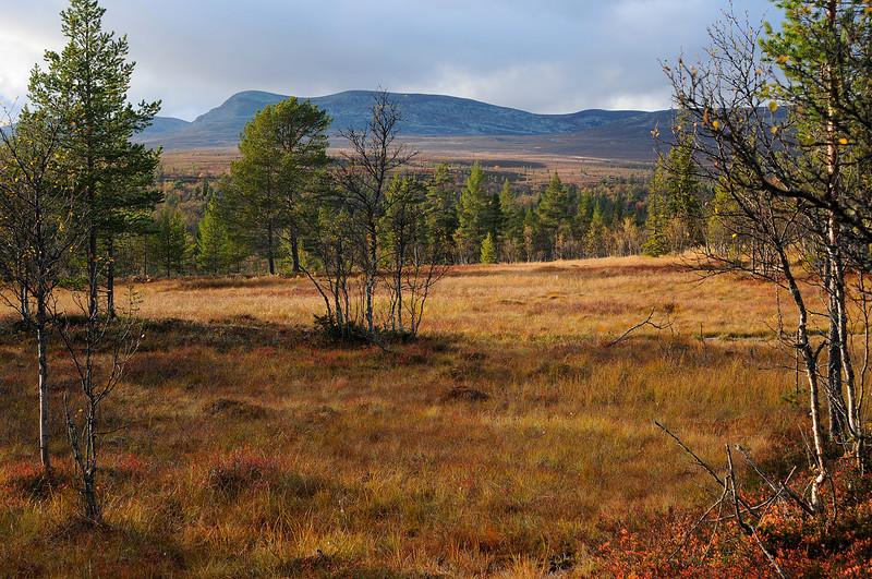 Autumn by Grovelsjoen, Sweden