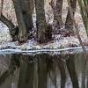 Reflection - Spejling