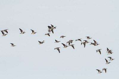 Fugle i luften