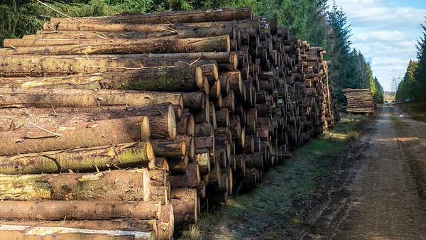 Skov plantage marts 2020