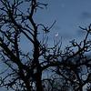 Nymåne och Venus i kosmisk dans den 22 mars 2015