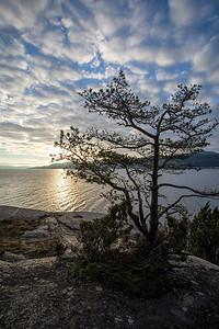 Furu og fjord / Pine and fjord Lahellholmen, Asker 28.11.2020 Canon 5D Mark IV + EF17-40mm f/4L USM @ 17 mm