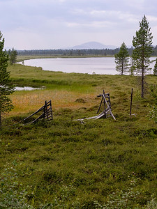 Fallen grind Härjedalen, Sverige 17.7.2021 Canon EOS R5 +  RF 24-105mm F4 L IS USM @ 47 mm
