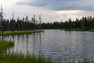 Skogstjern Fulufjell, Sverige 17.7.2021 Canon EOS R5 + RF 24-105mm F4 L IS USM @ 42 mm