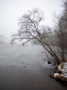 Trær ved bredden av Damtjern Damtjern, 6.12.2020 Canon 5D Mark IV + EF17-40mm f/4L USM @ 24 mm