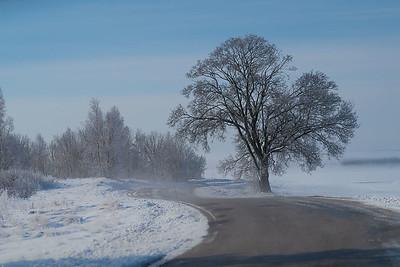 Tre ved veien /Tree at the side of the road Kvismaren, Sverige 15.4.2017 Canon Powershot G5X