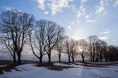 Trær /Trees Klokkarstua, Hurum 17.1.2015 Canon 5D Mark II + EF 17-40 mm L @ 24 mm