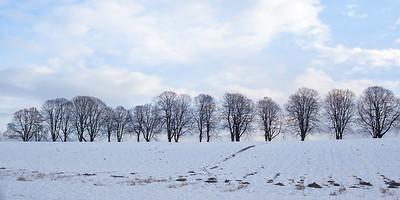 Trær /Trees Klokkarstua, Hurum 17.1.2015 Canon 5D Mark II + EF 50 mm 1,8