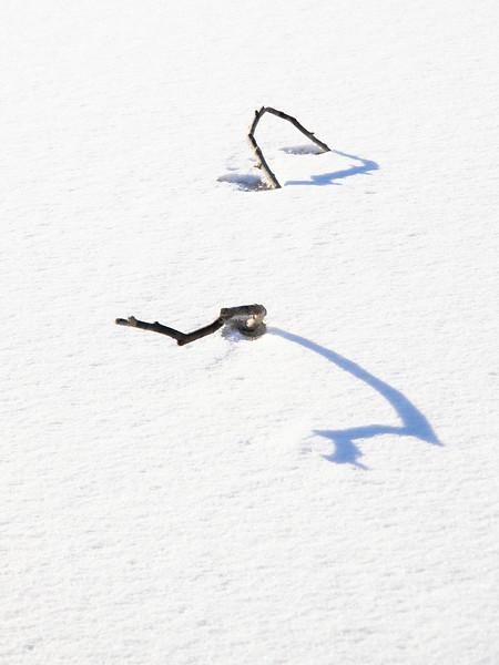 Pinner med skygger / Sticks with shadows<br /> Linnesstranda, Lier 18.2.2021<br /> Canon EOS R5 + RF24-105mm F4 L IS USM @ 74 mm