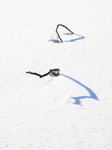 Pinner med skygger / Sticks with shadows Linnesstranda, Lier 18.2.2021 Canon EOS R5 + RF24-105mm F4 L IS USM @ 74 mm