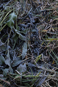Frosne planter / Frozen plants Linnesstranda, Lier 18.10.2020 Canon 5D Mark IV + EF17-40mm f/4L USM @ 31.0 mm