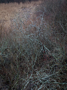 Lenende trær / Leaning trees Linnesstranda, Lier 13.12.2020 Canon 5D Mark IV + EF17-40mm f/4L USM @ 40 mm