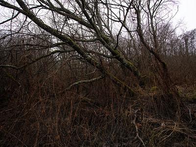 Lenende trær / Leaning trees Linnesstranda, Lier 6.12.2020 Canon 5D Mark IV + EF17-40mm f/4L USM