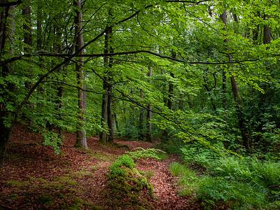 Løvskog i Fyledalen, Skåne Canon 20D + EF 17-40 mm 4.0-5.6 @ 17 mm