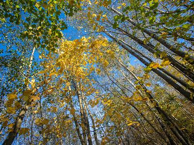 Høst i krattskogen Linnesstranda, Lier 18.10.2020 Canon 5D Mark IV + EF17-40mm f/4L USM