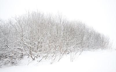 Vinterkratt