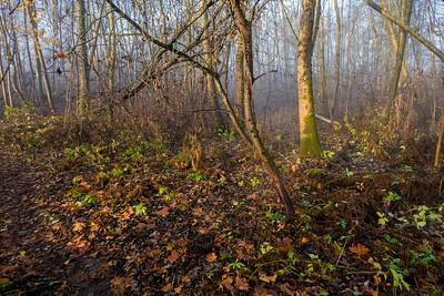 Krattskog høst Linnesstranda, Lier 7.11.2015 Canon PowerShot G5 X