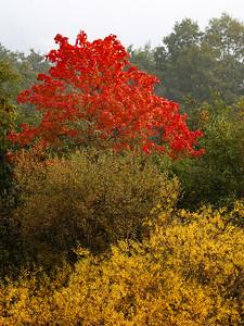 Høst på øya / Fall colors Linnesstranda, Lier 30.9.2012 Canon EOS 5D mark II + EF 100-400 mm 4,5-5,6 L