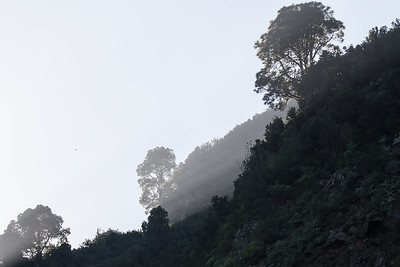 Landskap med falk / Landscape with falcon