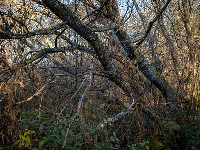 Lenende trær / Leaning trees Linnesstranda, Lier 18.10.2020 Canon 5D Mark IV + EF17-40mm f/4L USM