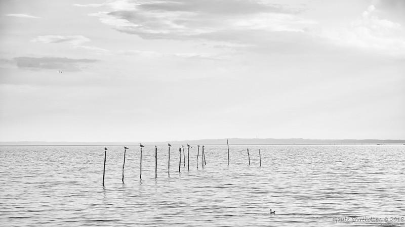 Måsar (Seagulls)