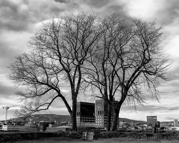 Tre og tårn (Trees and towers)