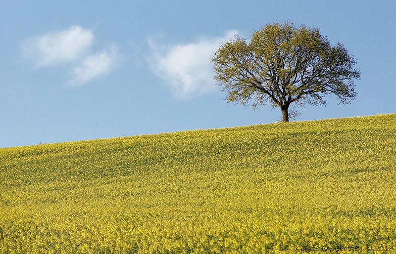 Blå-gult (Skåne).