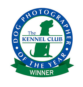 Winner 2nd place  in the Working dogs category  2018  Kennel club Dog photographer of the year .