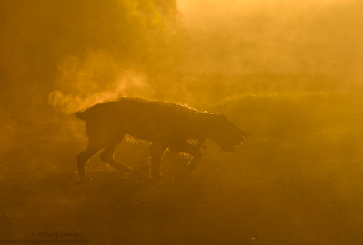 My winning image for Dog photographer of the year.
