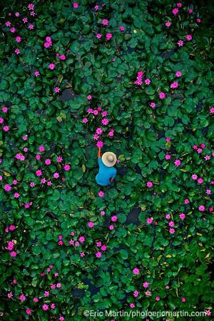 MALAISIE. ILE DE LANGKAWI. L HOTEL DATAI. Le jardinier de l hotel dans le bassin au lotus qui jouxte la reception de l hôtel