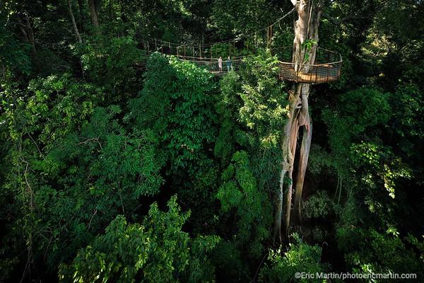 """MALAISIE. ILE DE LANGKAWI. L HOTEL DATAI. Le """"Canopy Walkway"""" : une passerelle suspendue dans les arbres qui permet de découvrir la canopée"""