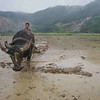 Man and oxen leveling a rice paddy for planting.