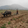 Man and ox plowing a field.