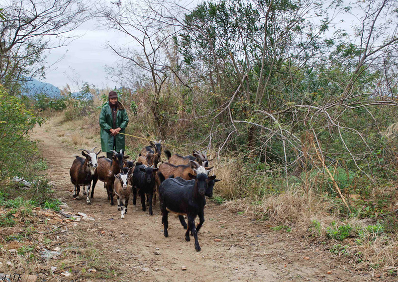 A goat herder.