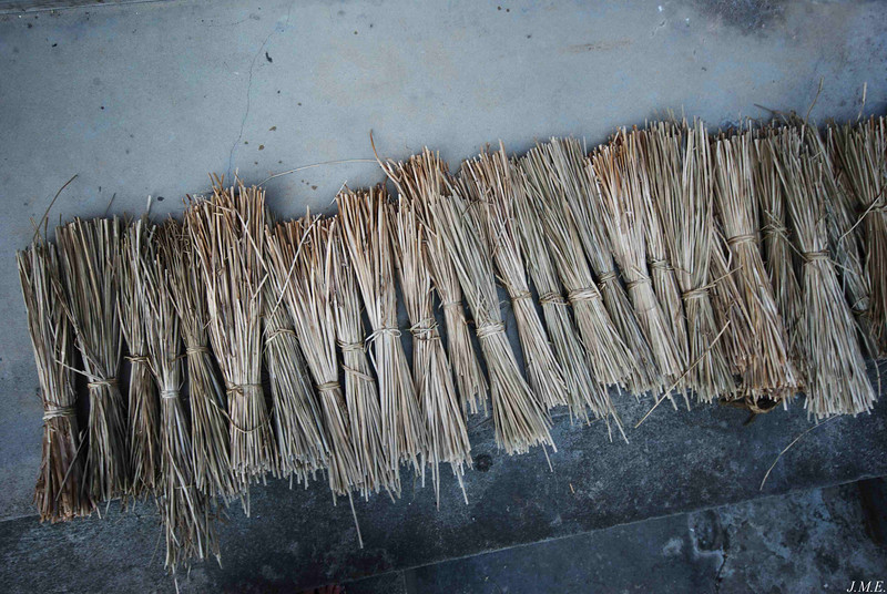 Marsh reeds as they appear after processing for use as binding twine for specially prepared fish.