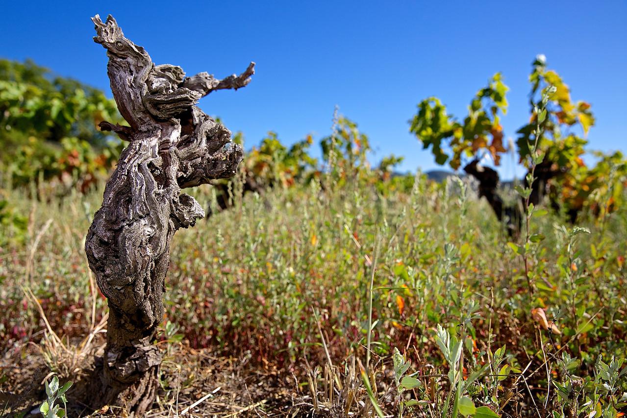 Gone But Not Forgotten.  Faugeres Vineyard.
