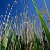 Tall Grass #2. Lad du Salagou