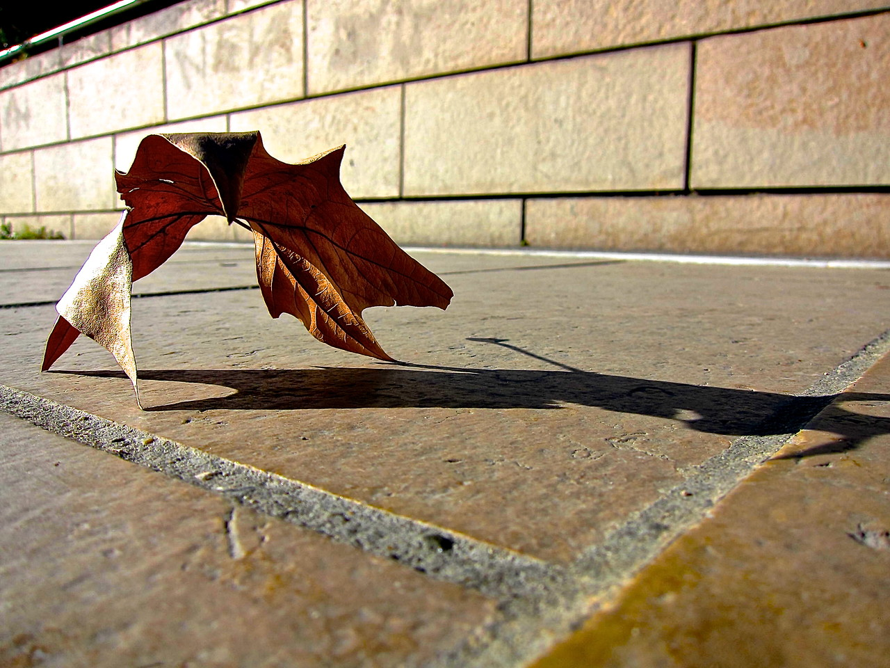 A Leaf... Montpellier.