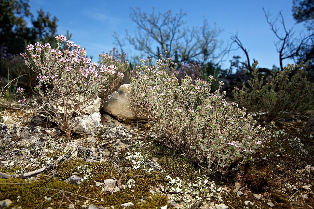 Wild Garrigue #2. Languedoc