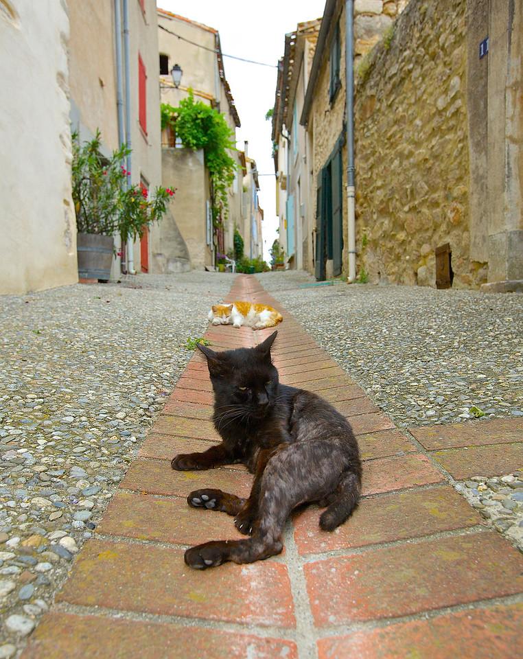 Stray Cats.  Montolieu.